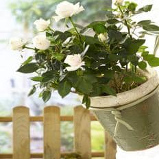Soft-Pflanzenbinder, dick
