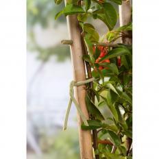 Soft-Pflanzenbinder, dünn