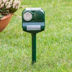 Solar-Vogelvertreiber