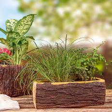 Baumstumpf-Blumenschale