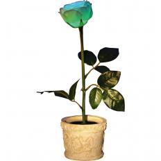 Solar-Rose im Topf
