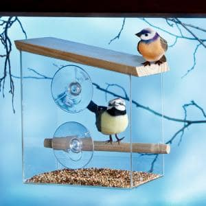 Transparentes Fenster-Vogelhaus