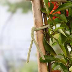 Soft-Pflanzenbinder dick-2