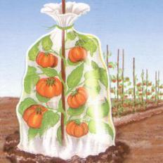 Thermobeutel für Pflanzen 6 Stück-2