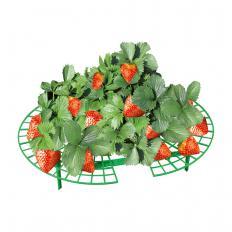 Erdbeer-Reifer 10 Stück-2