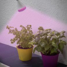 LED-Pflanzenleuchte-2