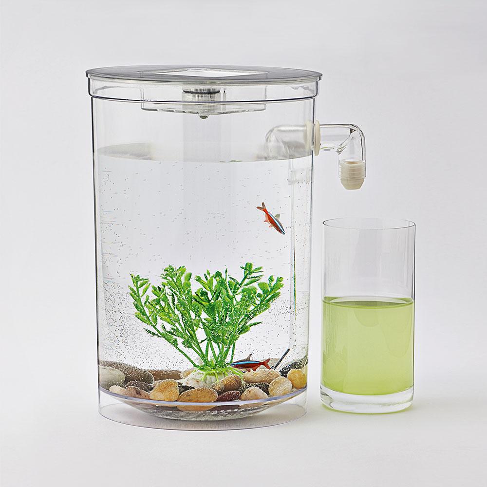 selbstreinigendes aquarium